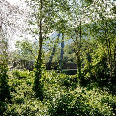 Wald Schluein